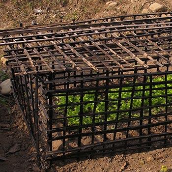 Seedling box: Dehra Dun. Northern India